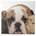 english bulldog puppy (4 months old) and two large square tile