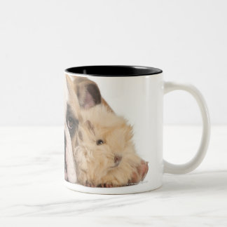 english bulldog puppy (4 months old) and two Two-Tone coffee mug