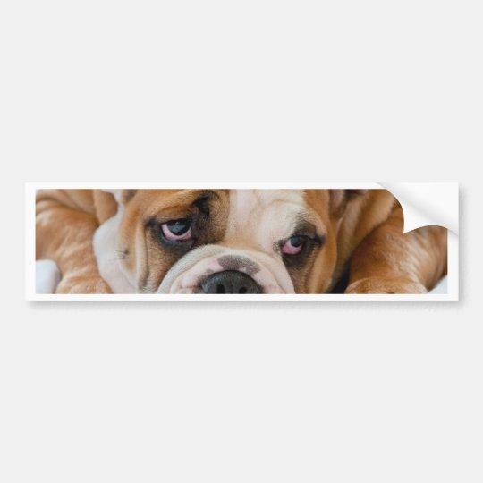 English bulldog puppy bumper sticker
