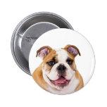 English bulldog puppy buttons