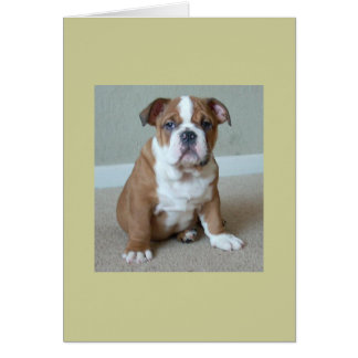 English Bulldog Puppy Greeting Cards