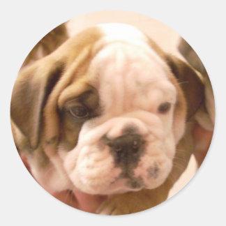 English Bulldog Puppy Classic Round Sticker