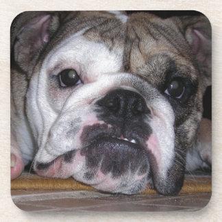 English Bulldog Puppy Beverage Coasters