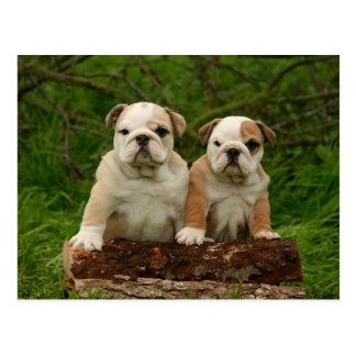 English Bulldog Puppy Dog Blank Postcard