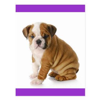 English Bulldog Puppy Dog Blue Blank Postcard