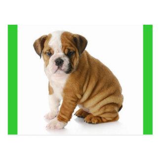English Bulldog Puppy Dog Green  Postcard