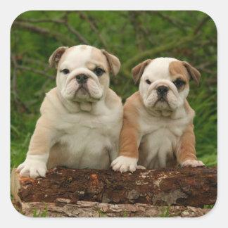 English Bulldog Puppy Dog Love Sticker / Seal