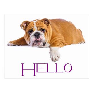 English Bulldog Puppy Dog - Purple Hello Postcard