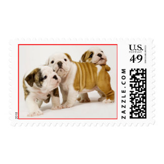 English Bulldog Puppy Dogs US Postage Stamps