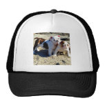 English Bulldog Puppy Love! Hat