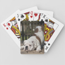 English Bulldog Puppy Playing Cards