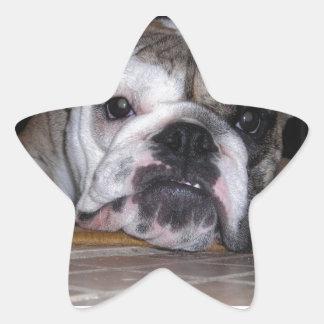 English Bulldog Puppy Star Sticker