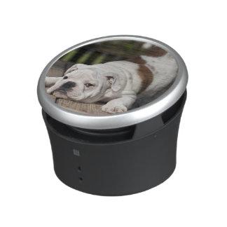 English bulldog puppy stretching down. bluetooth speaker