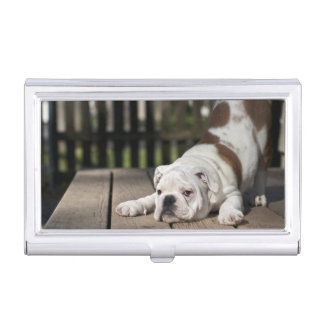 English bulldog puppy stretching down. business card case