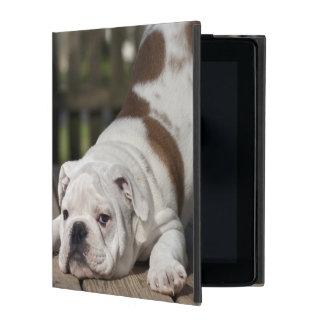 English bulldog puppy stretching down. iPad folio case