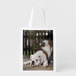 English bulldog puppy stretching down. reusable grocery bags