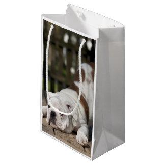 English bulldog puppy stretching down. small gift bag