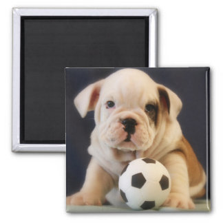 English Bulldog Puppy with Soccer Ball Square Magnet