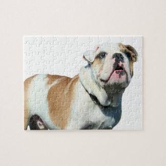 English bulldog puzzle