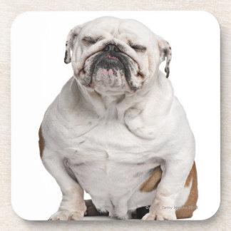 English Bulldog, sitting in front of white Coaster