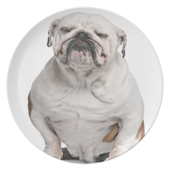 English Bulldog, sitting in front of white Dinner Plate