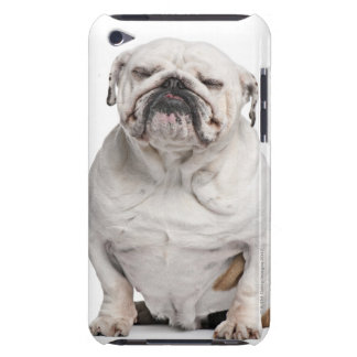 English Bulldog, sitting in front of white iPod Touch Cover