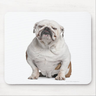 English Bulldog, sitting in front of white Mouse Pad