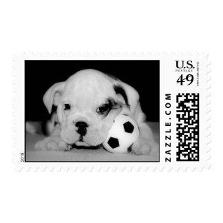 English Bulldog Soccer Puppy Stamps