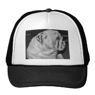 English Bulldog Trucker Hat