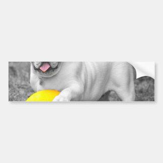 English bulldog white and the yellow ball car bumper sticker