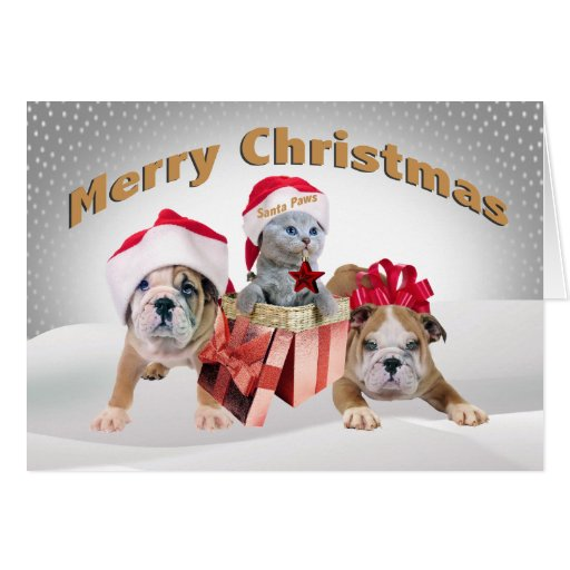 English Bulldog with kittensChristmas Cards