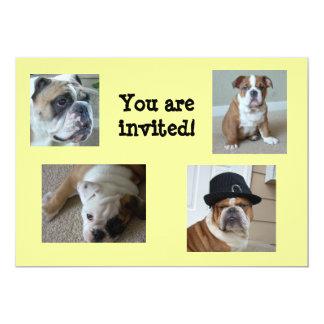 English Bulldogs Invitations Birthday/Any Occasion