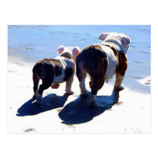 English Bulldogs Postcard