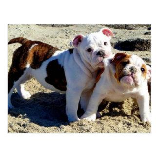 English Bulldogs Puppy Love! Post Cards