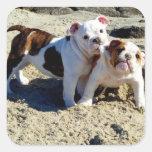 English Bulldogs Puppy Love! Square Stickers