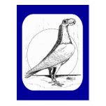 English Carrier Pigeon1978 Post Card