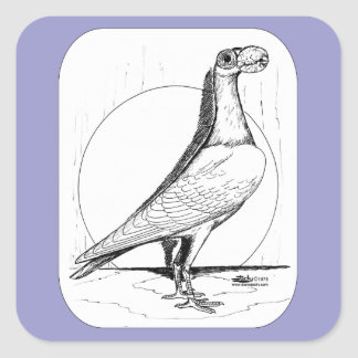 English Carrier Pigeon1978 Square Sticker