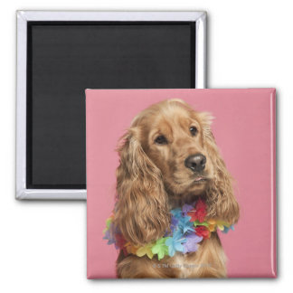 English Cocker Spaniel (10 months old) 2 Inch Square Magnet