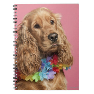English Cocker Spaniel (10 months old) Notebook
