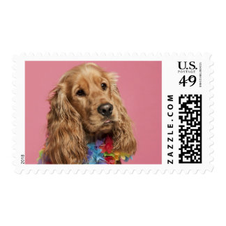 English Cocker Spaniel (10 months old) Postage