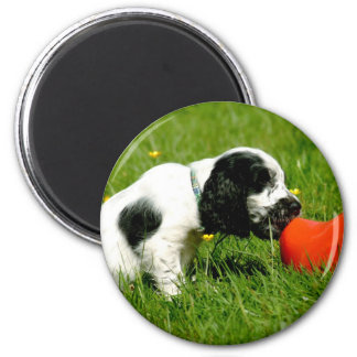 English Cocker Spaniel Puppy with Red Clog 2 Inch Round Magnet
