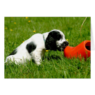 English Cocker Spaniel Puppy with Red Clog Card