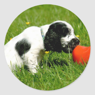 English Cocker Spaniel Puppy with Red Clog Classic Round Sticker