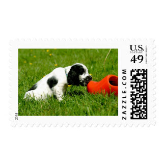 English Cocker Spaniel Puppy with Red Clog Postage