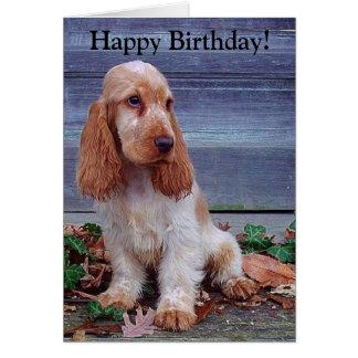 English Cocker Spaniels Birthday Card