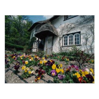 English cottage, pansies postcard