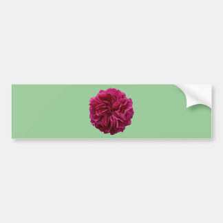 English Country Garden Frilly Red Rose Bumper Sticker