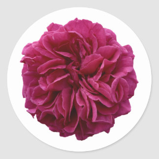 English Country Garden Frilly Red Rose Classic Round Sticker