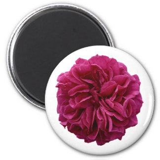 English Country Garden Frilly Red Rose 2 Inch Round Magnet