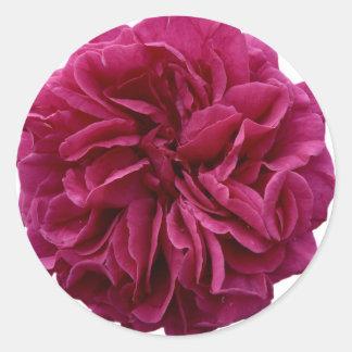 English Country Garden Rose Classic Round Sticker